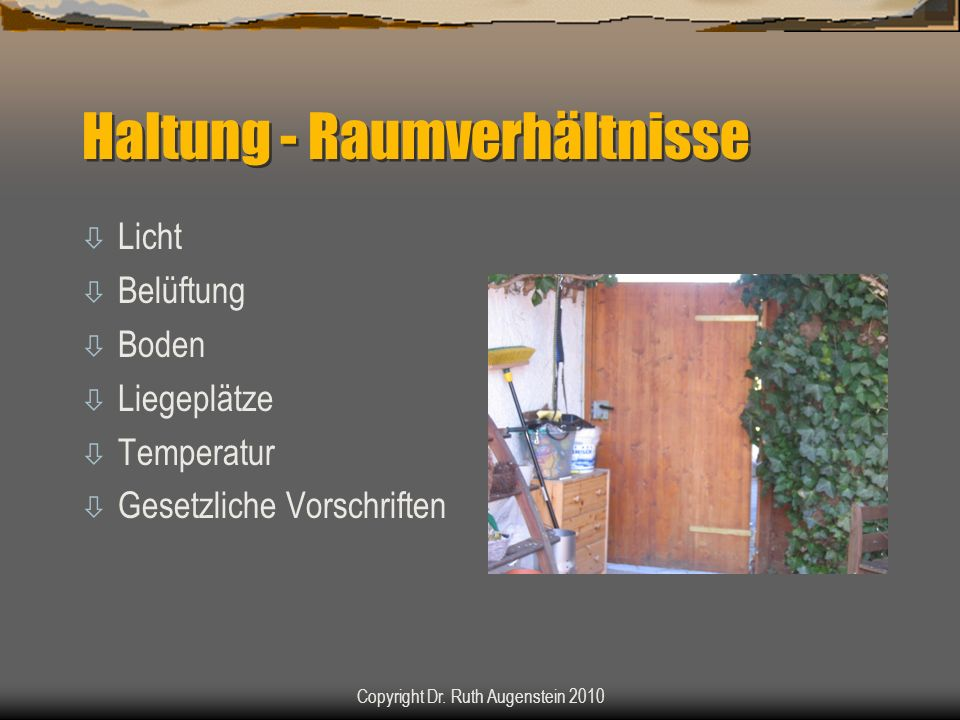 Haltung - Raumverhältnisse ò Licht ò Belüftung ò Boden ò Liegeplätze ò Temperatur ò Gesetzliche Vorschriften Copyright Dr. Ruth Augenstein 2010