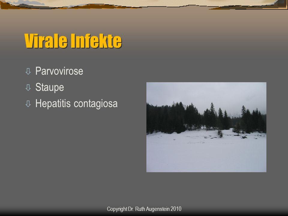 Virale Infekte ò Parvovirose ò Staupe ò Hepatitis contagiosa Copyright Dr. Ruth Augenstein 2010