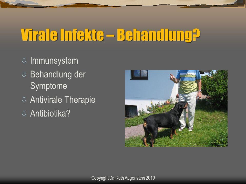 Virale Infekte – Behandlung? ò Immunsystem ò Behandlung der Symptome ò Antivirale Therapie ò Antibiotika? Copyright Dr. Ruth Augenstein 2010
