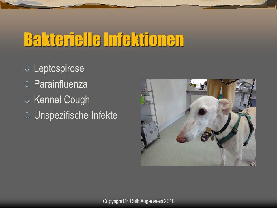 Bakterielle Infektionen ò Leptospirose ò Parainfluenza ò Kennel Cough ò Unspezifische Infekte Copyright Dr. Ruth Augenstein 2010