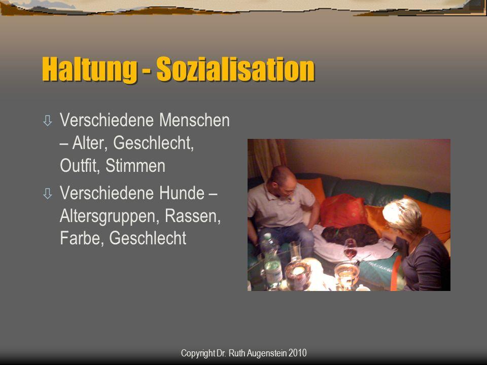 Haltung - Habituation ò Untergrund ò Räume ò Tageszeiten ò Dunkelheit ò Geräusche ò Außenbereich ò Auto Copyright Dr.