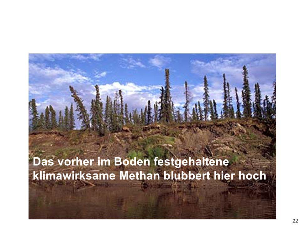 22 Das vorher im Boden festgehaltene klimawirksame Methan blubbert hier hoch