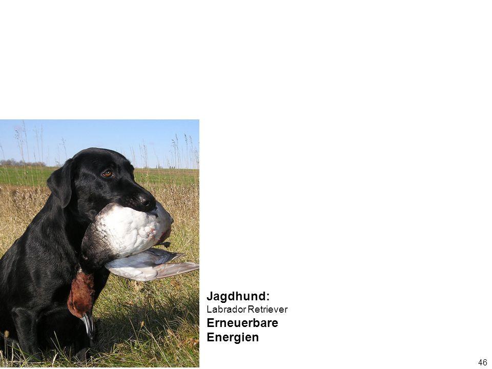 46 Jagdhund: Labrador Retriever Erneuerbare Energien