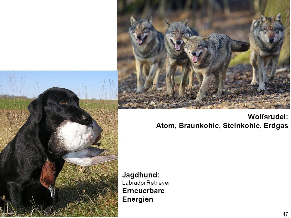 47 Wolfsrudel: Atom, Braunkohle, Steinkohle, Erdgas Jagdhund: Labrador Retriever Erneuerbare Energien