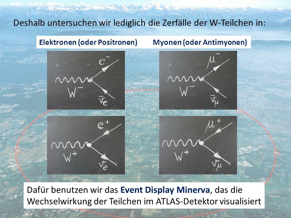 Deshalb untersuchen wir lediglich die Zerfälle der W-Teilchen in: Elektronen (oder Positronen) Myonen (oder Antimyonen) Dafür benutzen wir das Event Display Minerva, das die Wechselwirkung der Teilchen im ATLAS-Detektor visualisiert
