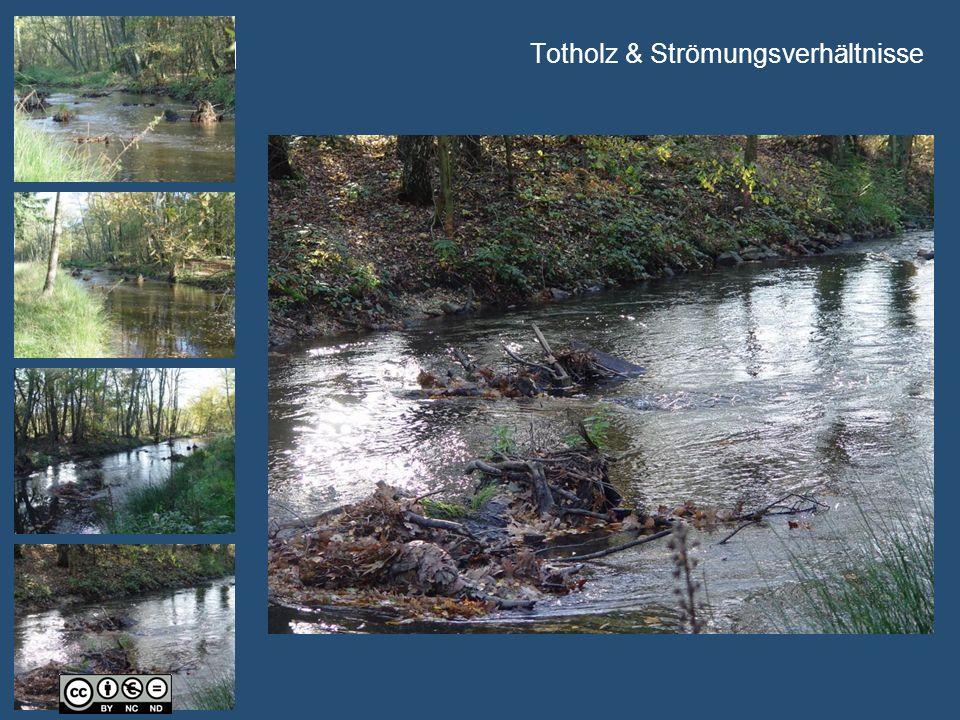 Univ.-Prof. Dr.-Ing. H. Nacken Totholz & Strömungsverhältnisse