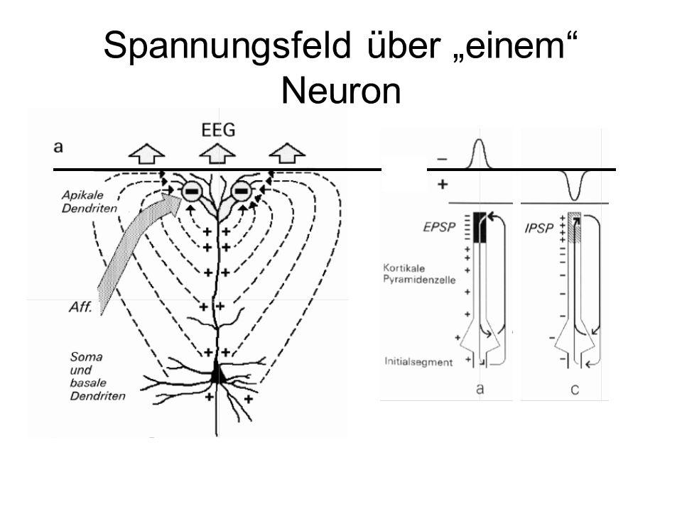 """Spannungsfeld über """"einem"""" Neuron"""