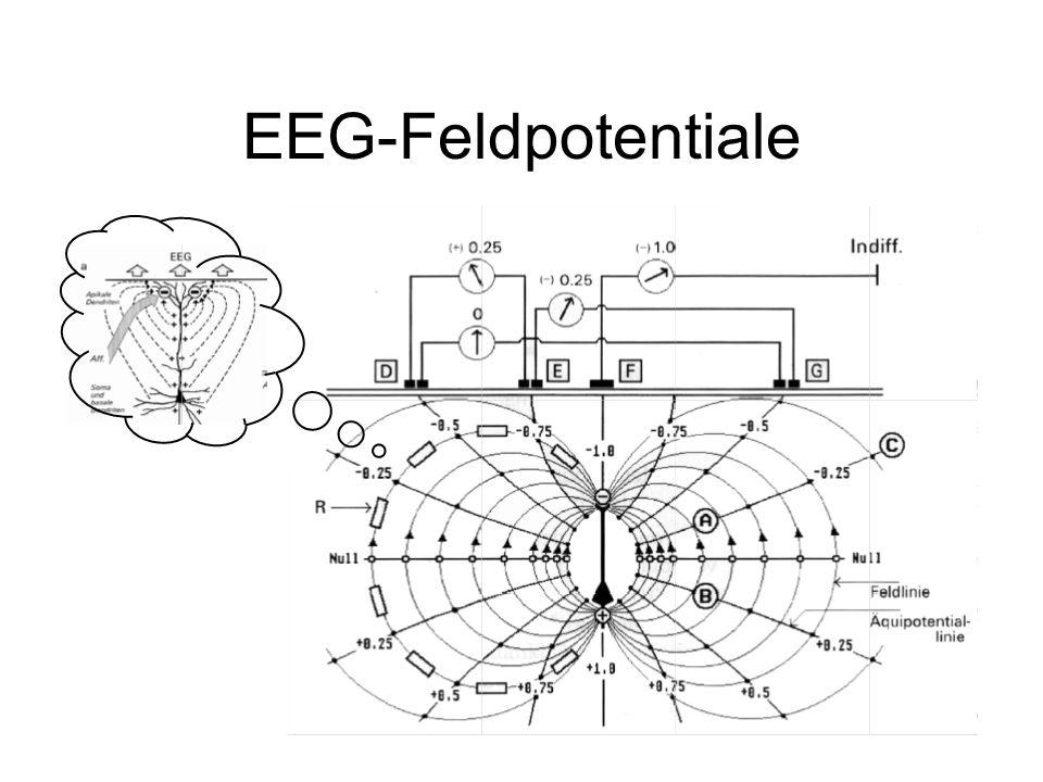EEG-Feldpotentiale