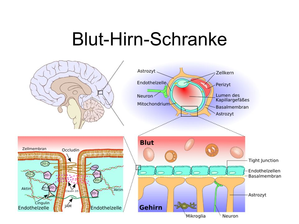 Reihenschaltung Eingang A Eingang B HirnrindenaktivitätEEG
