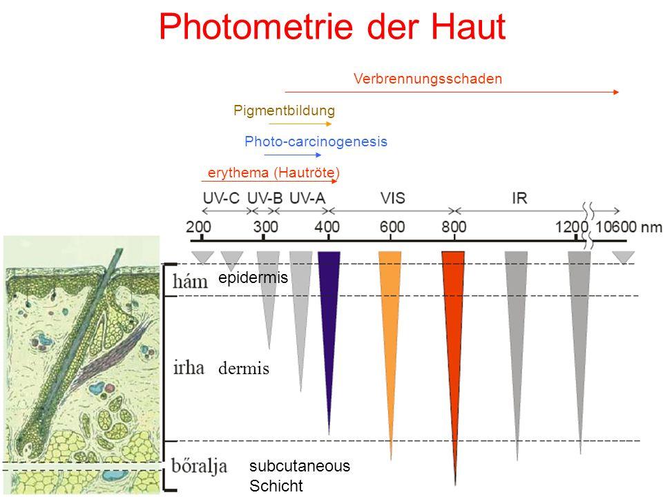 Photometrie der Haut dermis epidermis subcutaneous Schicht erythema (Hautröte) Photo-carcinogenesis Pigmentbildung Verbrennungsschaden