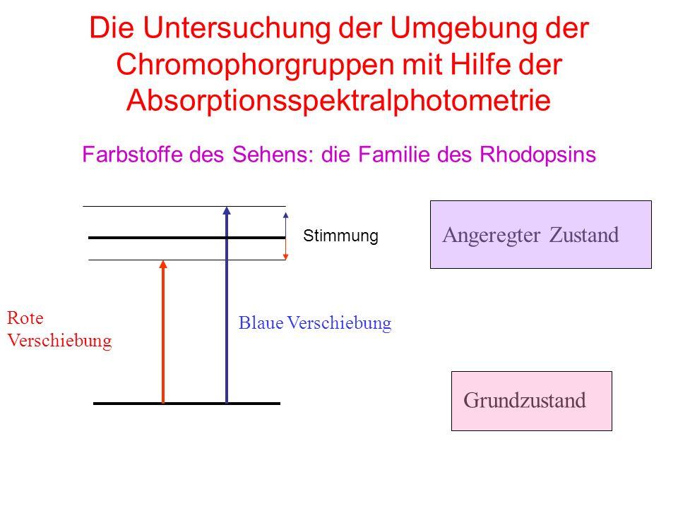 Die Untersuchung der Umgebung der Chromophorgruppen mit Hilfe der Absorptionsspektralphotometrie Farbstoffe des Sehens: die Familie des Rhodopsins Blaue Verschiebung Angeregter Zustand Grundzustand Rote Verschiebung Stimmung