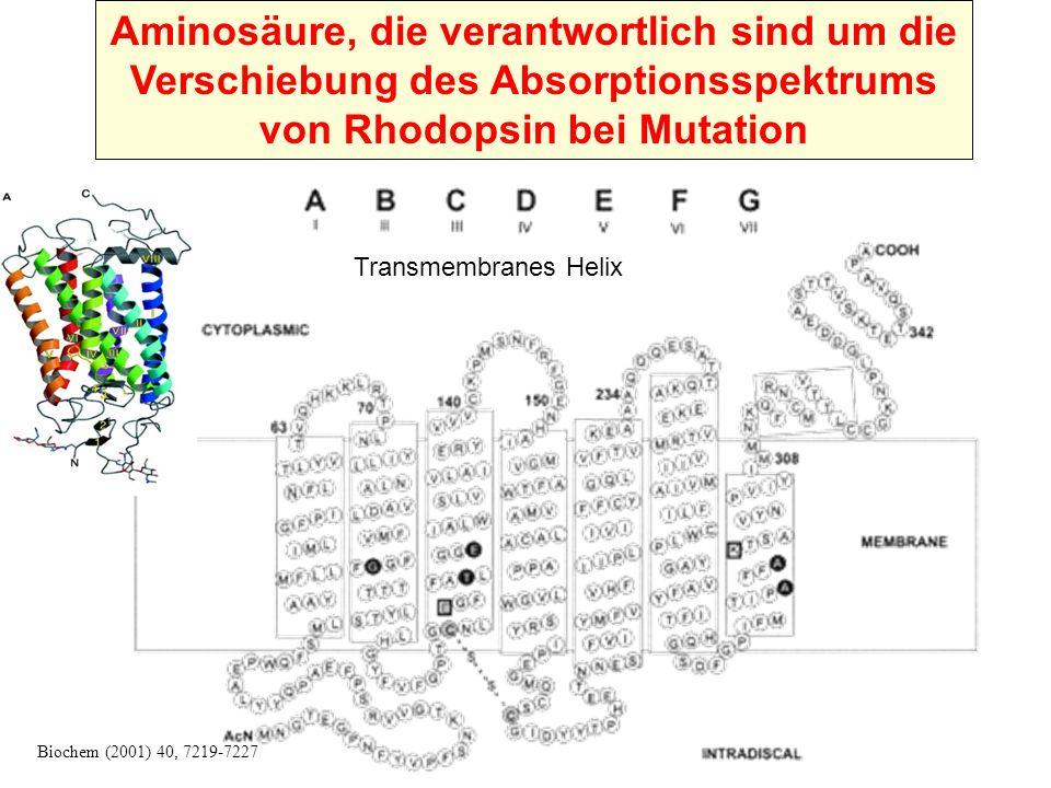 Aminosäure, die verantwortlich sind um die Verschiebung des Absorptionsspektrums von Rhodopsin bei Mutation Biochem (2001) 40, 7219-7227 Transmembranes Helix