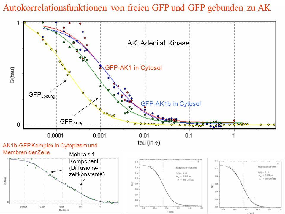 AK: Adenilat Kinase GFP Lösung GFP Zelle GFP-AK1 in Cytosol GFP-AK1b in Cytosol Autokorrelationsfunktionen von freien GFP und GFP gebunden zu AK AK1b-GFP Komplex in Cytoplasm und Membran der Zelle.