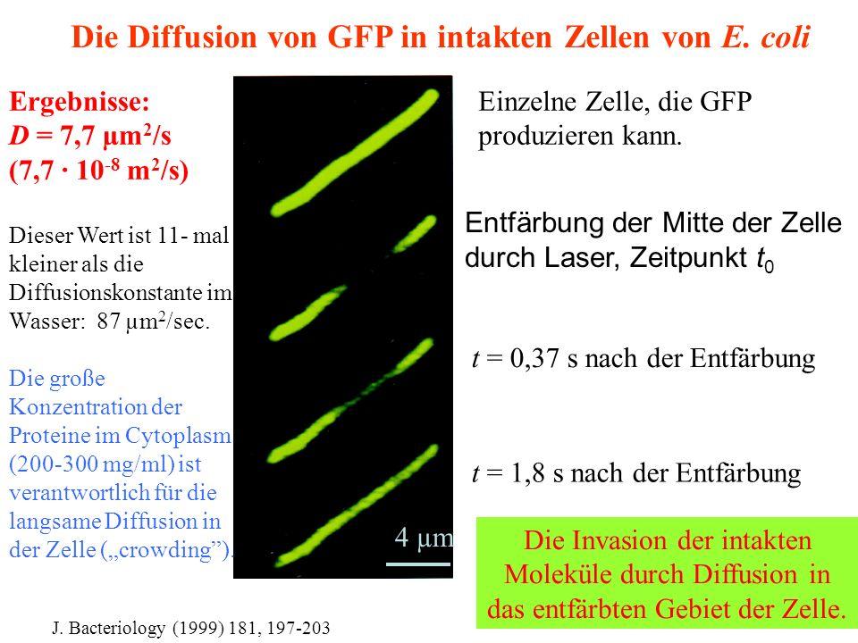 Einzelne Zelle, die GFP produzieren kann.