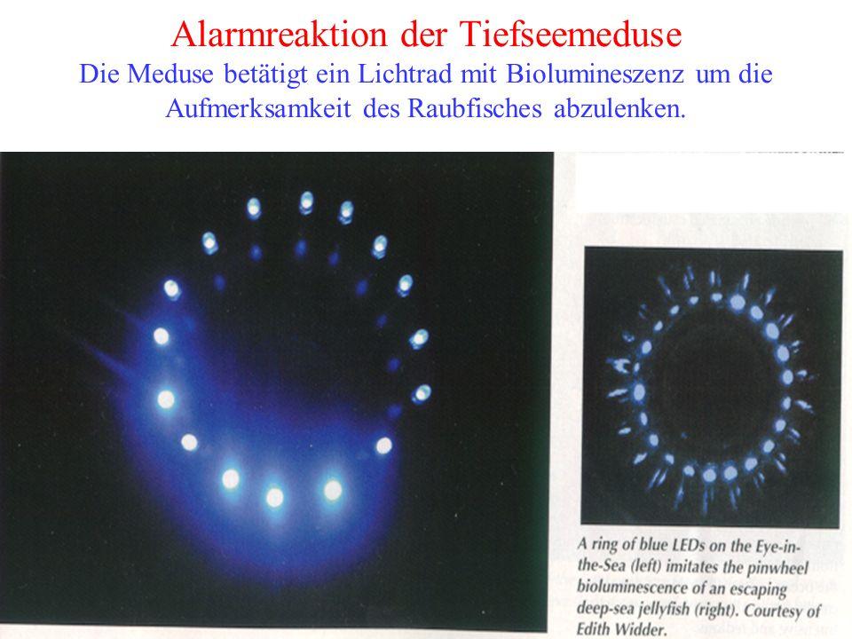 Alarmreaktion der Tiefseemeduse Die Meduse betätigt ein Lichtrad mit Biolumineszenz um die Aufmerksamkeit des Raubfisches abzulenken.
