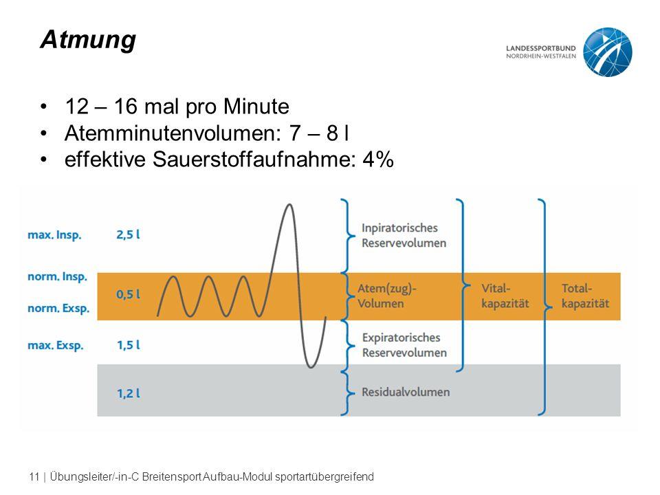 11 | Übungsleiter/-in-C Breitensport Aufbau-Modul sportartübergreifend Atmung 12 – 16 mal pro Minute Atemminutenvolumen: 7 – 8 l effektive Sauerstoffaufnahme: 4%