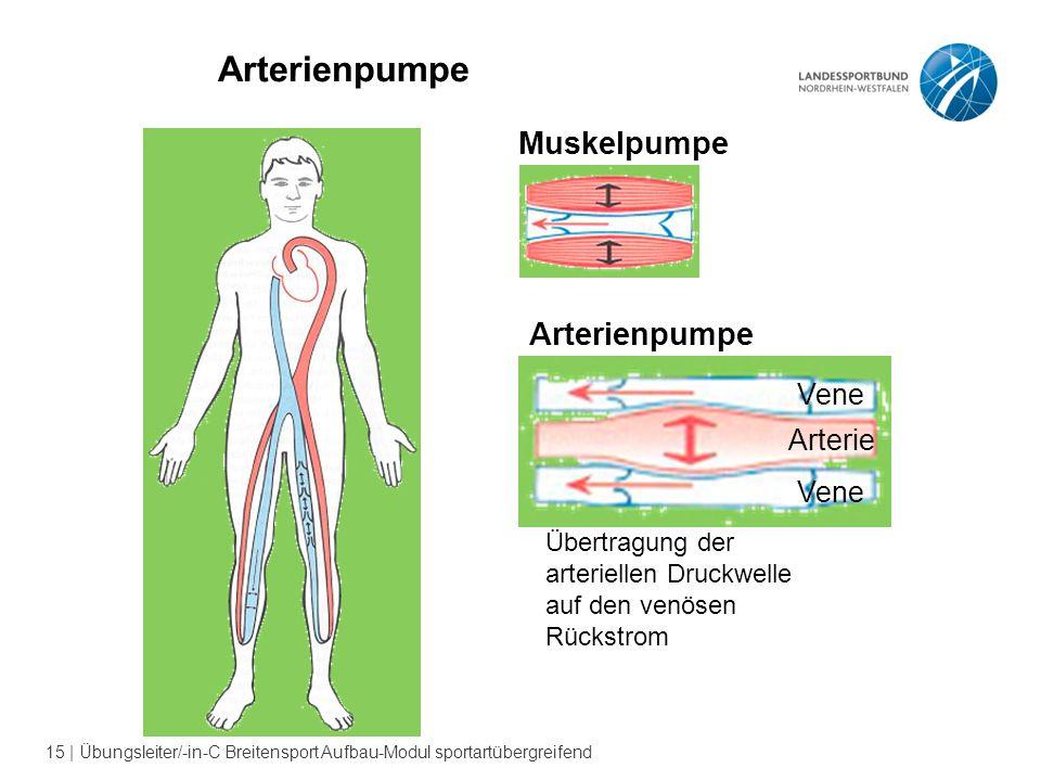 15 | Übungsleiter/-in-C Breitensport Aufbau-Modul sportartübergreifend Arterienpumpe Muskelpumpe Übertragung der arteriellen Druckwelle auf den venösen Rückstrom Vene Arterienpumpe Vene Arterie