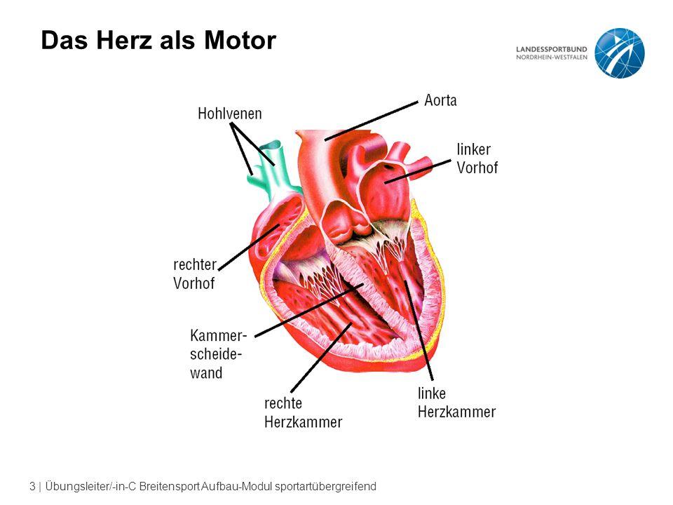 3 | Übungsleiter/-in-C Breitensport Aufbau-Modul sportartübergreifend Das Herz als Motor