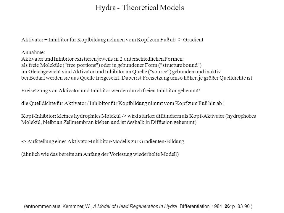 Hydra - Theoretical Models (entnommen aus: Kemmner, W., A Model of Head Regeneration in Hydra.