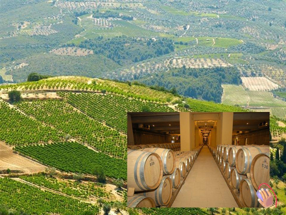 Nemea Weinstrasse BBesuch Weingut SEMELI in Nemea Führung von : Frau Sigiridi – PR manager