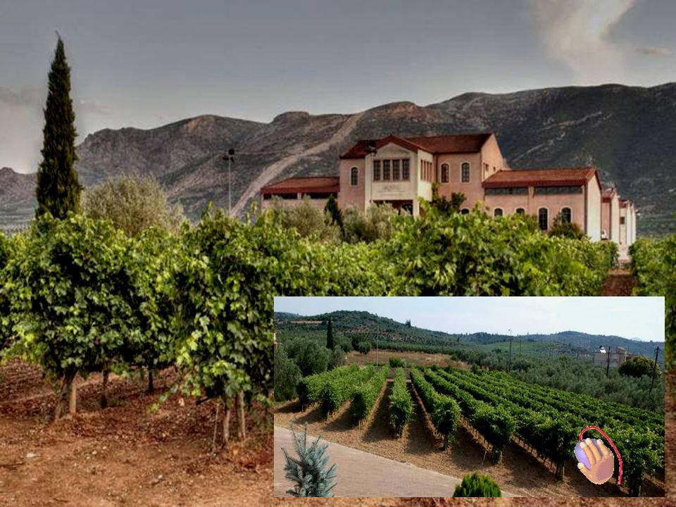 Nemea Weinstrasse BBesuch Weingut SKOURAS in Argos Führung von : Herr Skouras – Besitzer / Enologist + Gina – PR Manager