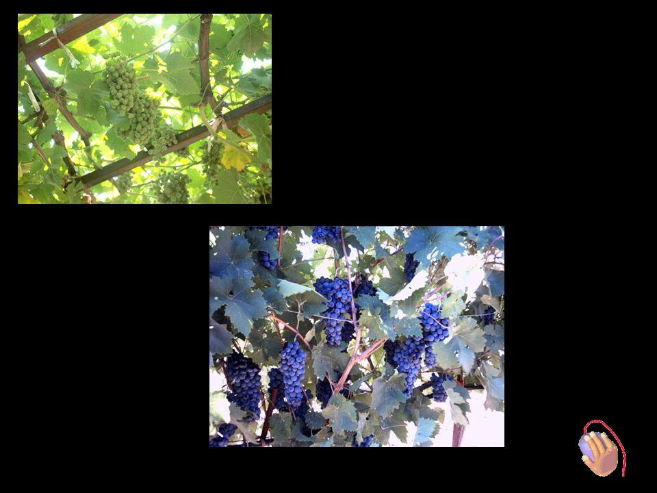 Nemea Weinstrasse BBesuch Weingut PALIVOS in Nemea Führung von : Herr Palivos – Besitzer / Enologist + Katerina – PR Manager
