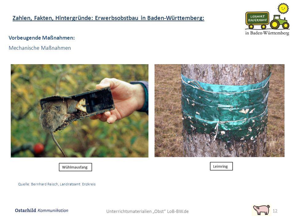 12 Zahlen, Fakten, Hintergründe: Erwerbsobstbau in Baden-Württemberg: Vorbeugende Maßnahmen: Mechanische Maßnahmen Quelle: Bernhard Reisch, Landratsam