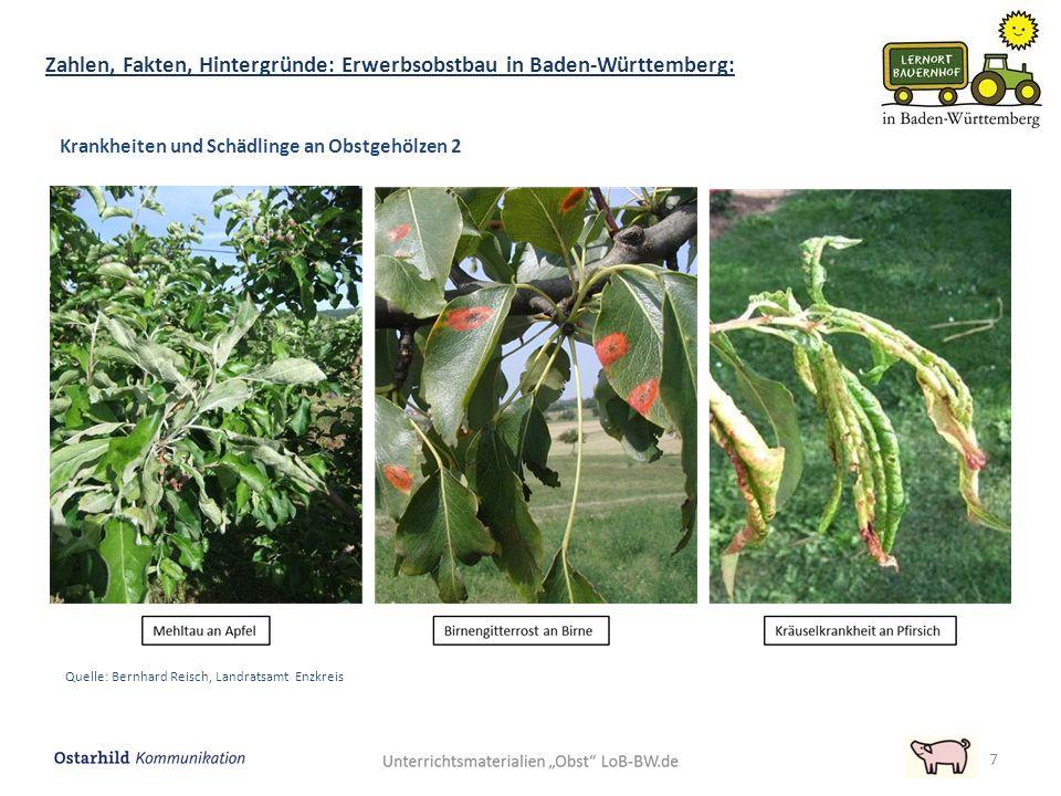 7 Zahlen, Fakten, Hintergründe: Erwerbsobstbau in Baden-Württemberg: Krankheiten und Schädlinge an Obstgehölzen 2 Quelle: Bernhard Reisch, Landratsamt Enzkreis
