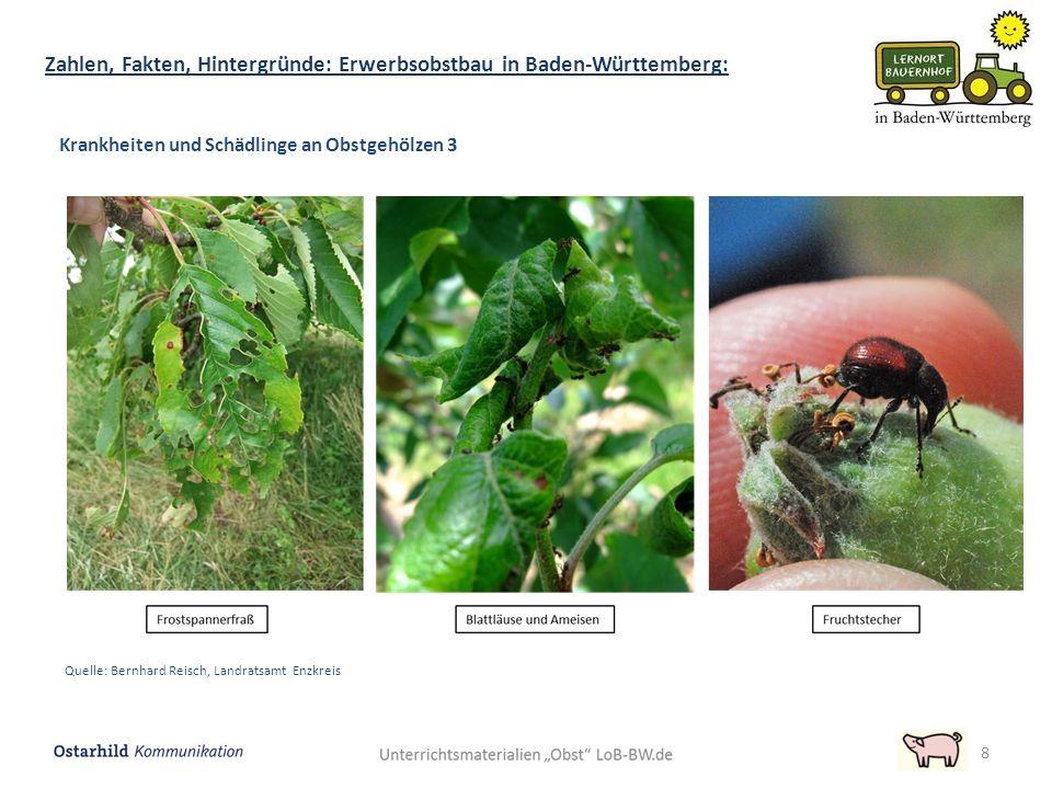 8 Zahlen, Fakten, Hintergründe: Erwerbsobstbau in Baden-Württemberg: Krankheiten und Schädlinge an Obstgehölzen 3 Quelle: Bernhard Reisch, Landratsamt Enzkreis