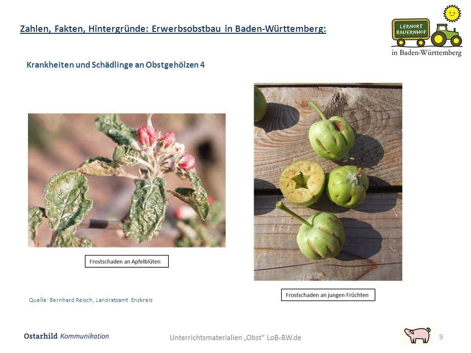 9 Zahlen, Fakten, Hintergründe: Erwerbsobstbau in Baden-Württemberg: Krankheiten und Schädlinge an Obstgehölzen 4 Quelle: Bernhard Reisch, Landratsamt