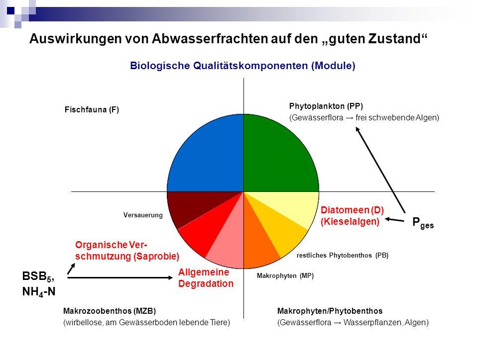 """Auswirkungen von Abwasserfrachten auf den """"guten Zustand Fischfauna (F) Phytoplankton (PP) (Gewässerflora → frei schwebende Algen) Diatomeen (D) (Kieselalgen) restliches Phytobenthos (PB) Makrophyten (MP) Allgemeine Degradation Organische Ver- schmutzung (Saprobie) Versauerung Makrozoobenthos (MZB) (wirbellose, am Gewässerboden lebende Tiere) Makrophyten/Phytobenthos (Gewässerflora → Wasserpflanzen, Algen) BSB 5, NH 4 -N P ges Biologische Qualitätskomponenten (Module)"""