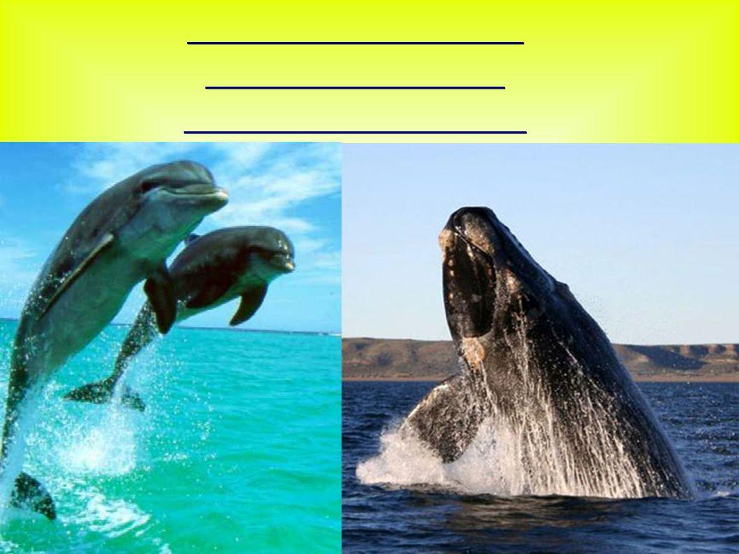Verständigung und Orientierung von Walen und Delfinen