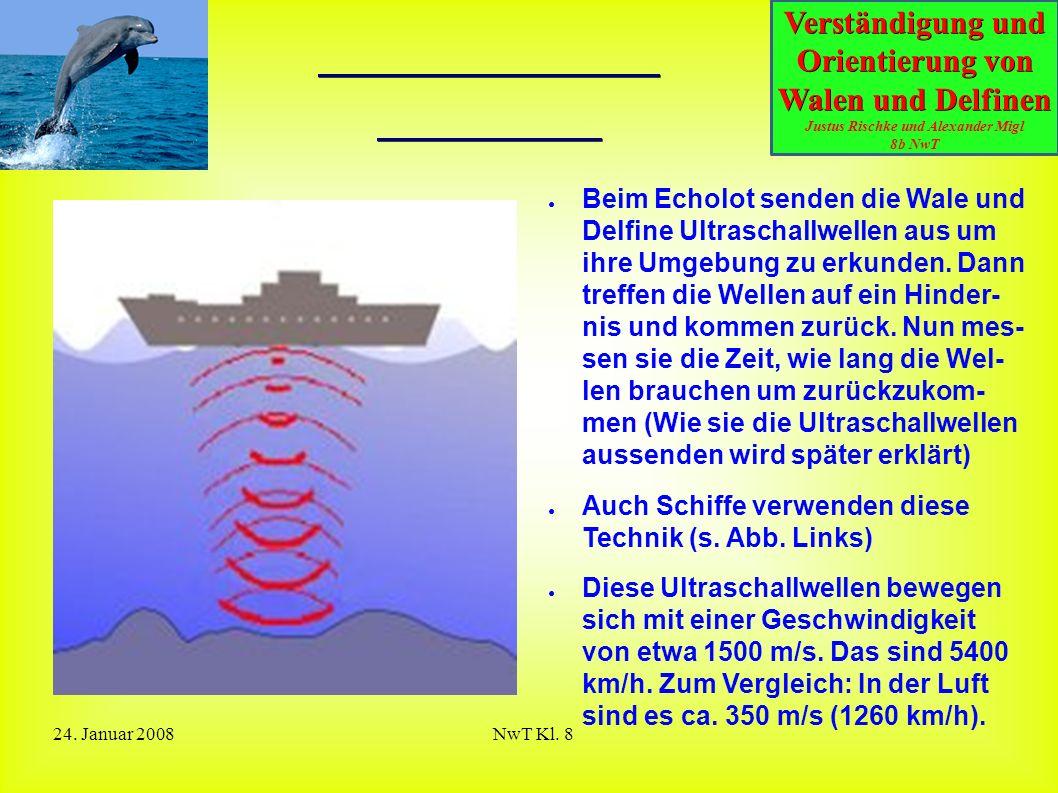 Verständigung und Orientierung von Walen und Delfinen Justus Rischke und Alexander Migl 8b NwT 24. Januar 2008NwT Kl. 8 Was bedeutet Echolot? ● Beim E