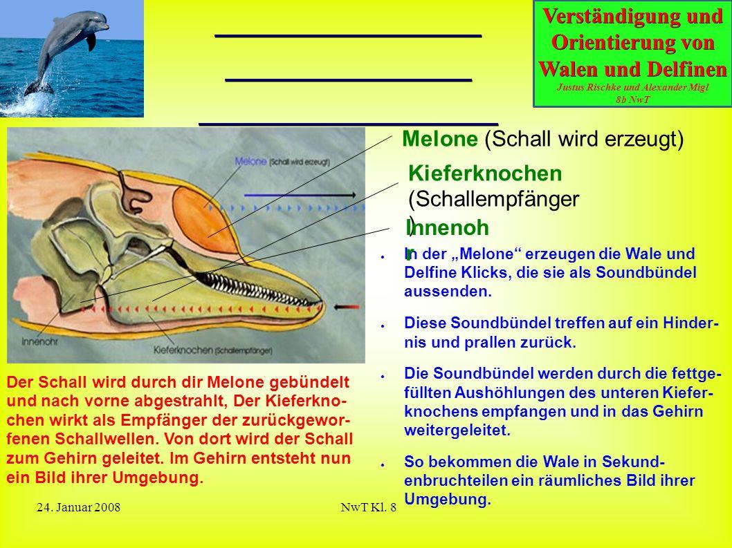 Verständigung und Orientierung von Walen und Delfinen Justus Rischke und Alexander Migl 8b NwT 24. Januar 2008NwT Kl. 8 Erzeugung und Aufnahme der Ult