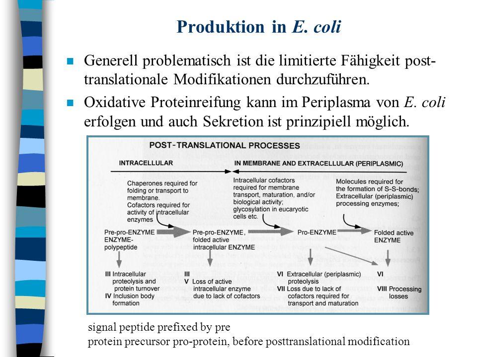 Produktion in E. coli n Generell problematisch ist die limitierte Fähigkeit post- translationale Modifikationen durchzuführen. n Oxidative Proteinreif