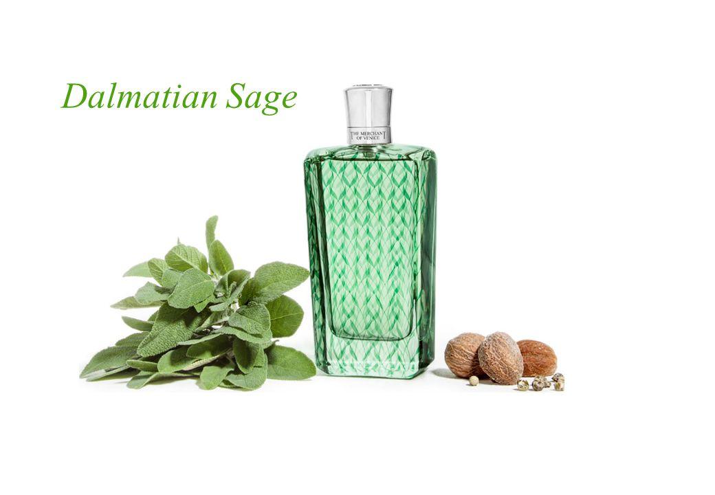 Dalmatian Sage