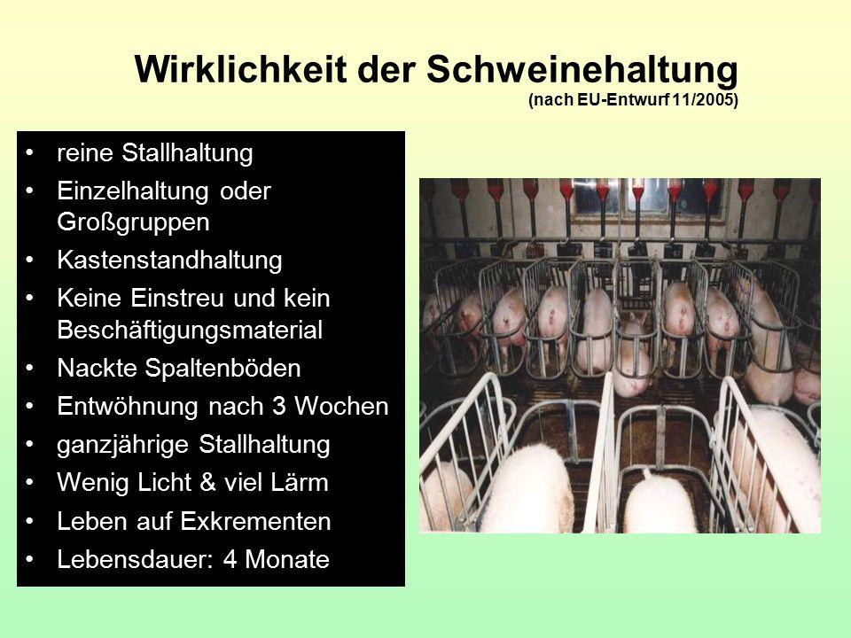 Wirklichkeit der Schweinehaltung (nach EU-Entwurf 11/2005) reine Stallhaltung Einzelhaltung oder Großgruppen Kastenstandhaltung Keine Einstreu und kei