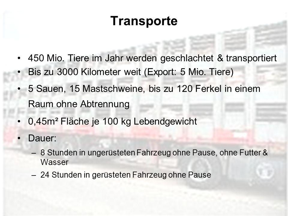 Transporte 450 Mio. Tiere im Jahr werden geschlachtet & transportiert Bis zu 3000 Kilometer weit (Export: 5 Mio. Tiere) 5 Sauen, 15 Mastschweine, bis