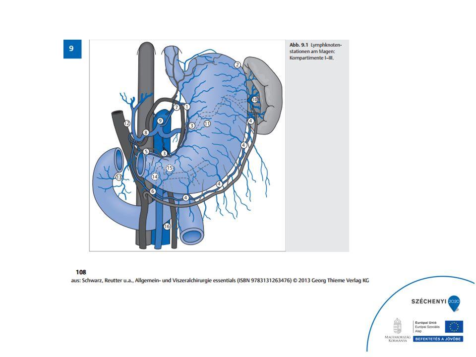 Der Lymphabfluss erfolgt parallel zu den Arterien, allerdings natürlich in der umgekehrten Richtung.