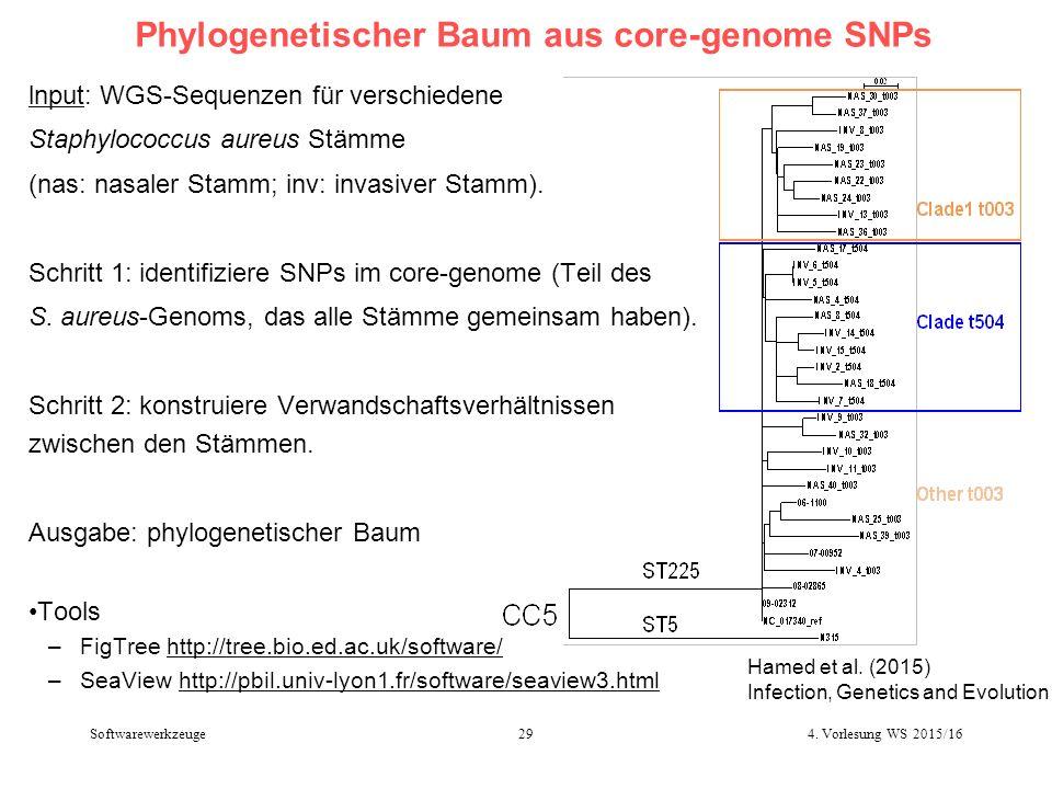 Phylogenetischer Baum aus core-genome SNPs lnput: WGS-Sequenzen für verschiedene Staphylococcus aureus Stämme (nas: nasaler Stamm; inv: invasiver Stamm).