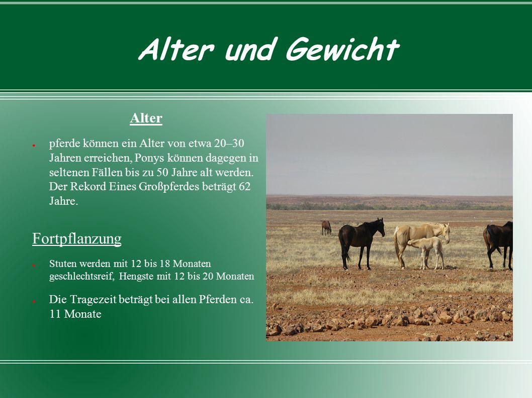 Alter und Gewicht Alter ● pferde können ein Alter von etwa 20–30 Jahren erreichen, Ponys können dagegen in seltenen Fällen bis zu 50 Jahre alt werden.