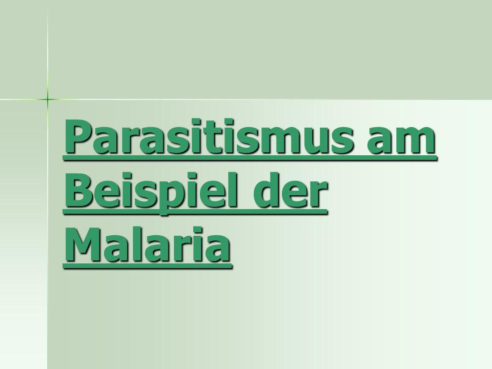 Parasitismus am Beispiel der Malaria