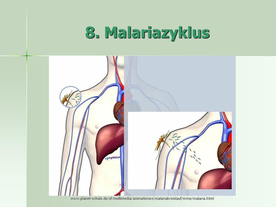 8. Malariazyklus www.planet-schule.de/sf/multimedia/animationen/malariakreislauf/mme/malaria.html