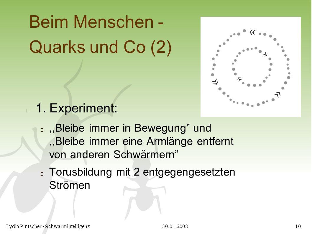 """30.01.2008Lydia Pintscher - Schwarmintelligenz10 Beim Menschen - Quarks und Co (2) 1. Experiment:,,Bleibe immer in Bewegung"""" und,,Bleibe immer eine Ar"""