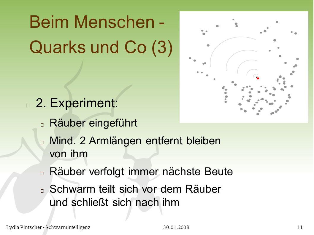 30.01.2008Lydia Pintscher - Schwarmintelligenz11 Beim Menschen - Quarks und Co (3) 2. Experiment: Räuber eingeführt Mind. 2 Armlängen entfernt bleiben
