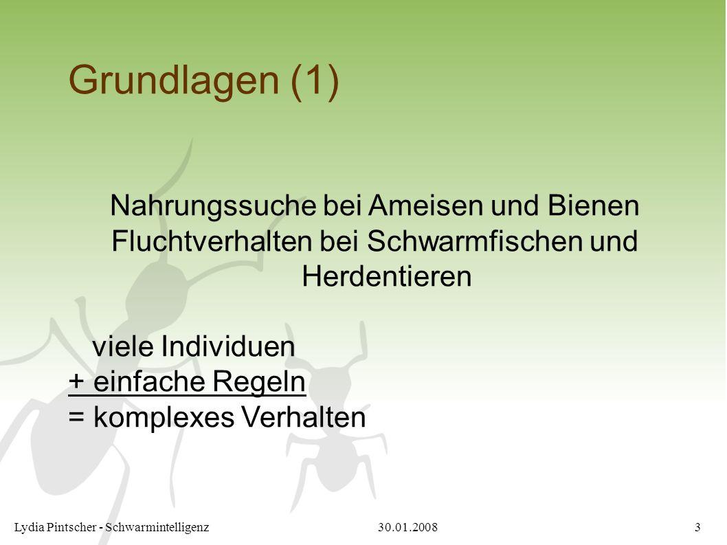 30.01.2008Lydia Pintscher - Schwarmintelligenz3 Grundlagen (1) Nahrungssuche bei Ameisen und Bienen Fluchtverhalten bei Schwarmfischen und Herdentiere
