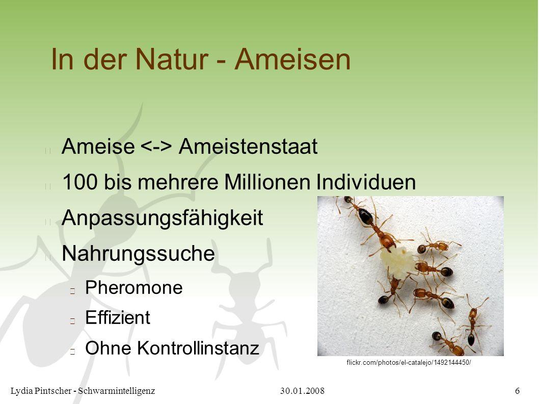 30.01.2008Lydia Pintscher - Schwarmintelligenz6 In der Natur - Ameisen Ameise Ameistenstaat 100 bis mehrere Millionen Individuen Anpassungsfähigkeit N