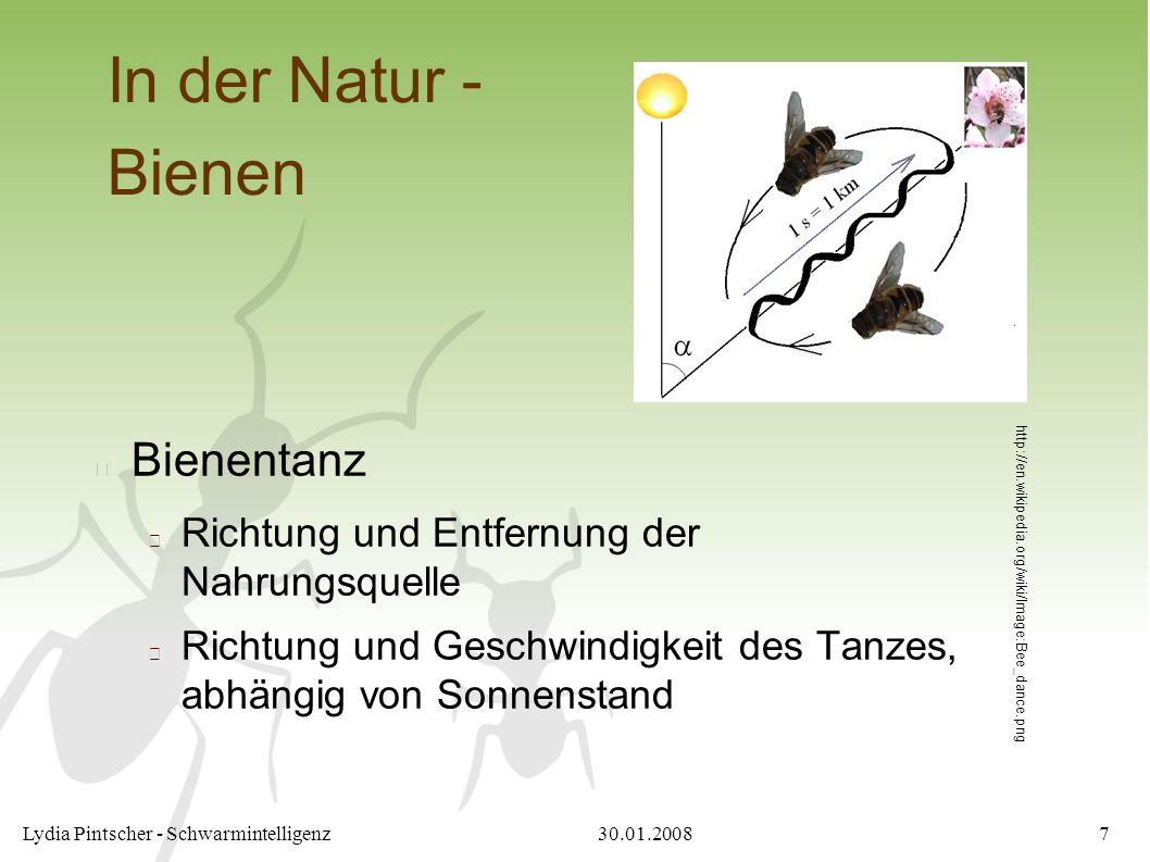 30.01.2008Lydia Pintscher - Schwarmintelligenz7 In der Natur - Bienen Bienentanz Richtung und Entfernung der Nahrungsquelle Richtung und Geschwindigkeit des Tanzes, abhängig von Sonnenstand http://en.wikipedia.org/wiki/Image:Bee_dance.png