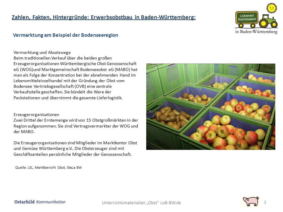 3 Vermarktung am Beispiel der Bodenseeregion Quelle: LEL, Marktbericht Obst, StaLa BW Vermarktung und Absatzwege Beim traditionellen Verkauf über die beiden großen Erzeugerorganisationen Württembergische Obst Genossenschaft eG (WOG)und Marktgemeinschaft Bodenseeobst eG (MABO) hat man als Folge der Konzentration bei der abnehmenden Hand im Lebensmitteleinzelhandel mit der Gründung der Obst vom Bodensee Vertriebsgesellschaft (OVB) eine zentrale Verkaufsstelle geschaffen.