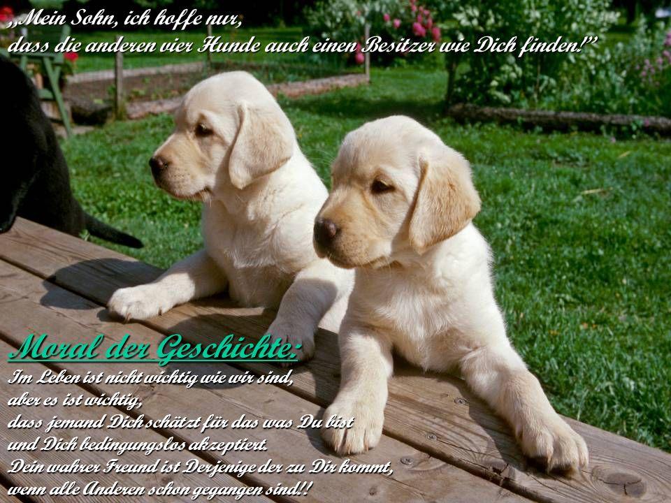 """verteilt durch www.funmail2u.dewww.funmail2u.de""""Mein Sohn, ich hoffe nur, dass die anderen vier Hunde auch einen Besitzer wie Dich finden! Moral der Geschichte: Im Leben ist nicht wichtig wie wir sind, aber es ist wichtig, dass jemand Dich schätzt für das was Du bist und Dich bedingungslos akzeptiert."""